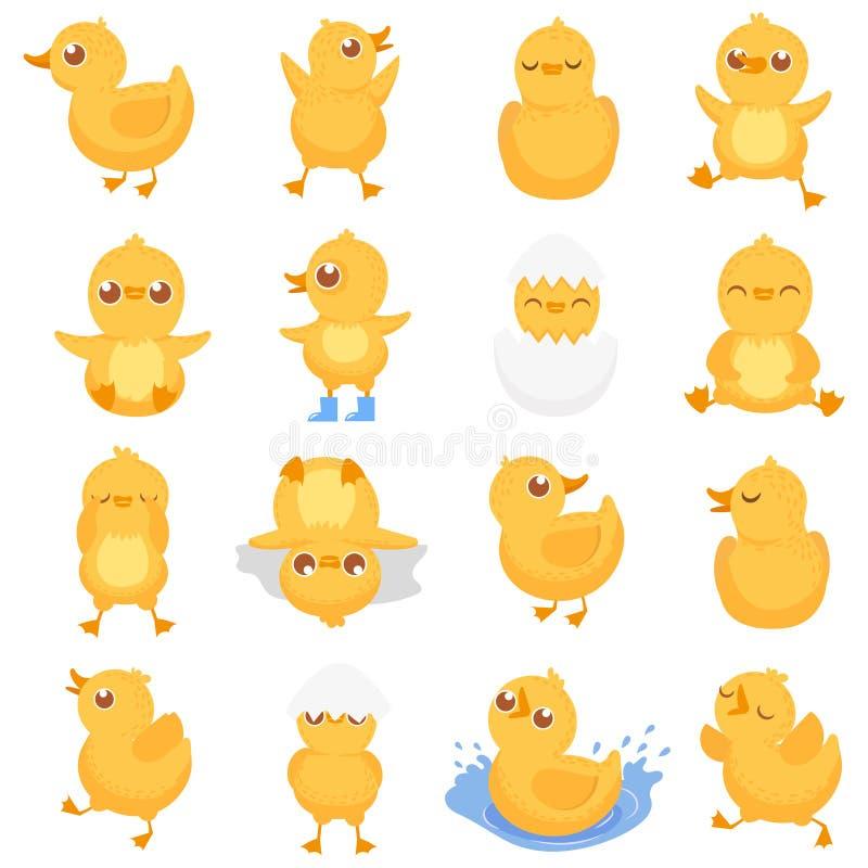 Gelbes Entlein Nettes Entenküken, kleine Enten und ducky Baby lokalisierte Karikaturvektorillustration vektor abbildung