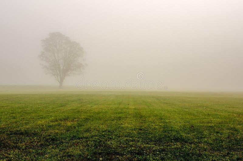 Gelbes Feld, einsamer Baum, bewölkter blauer Himmel lizenzfreies stockbild