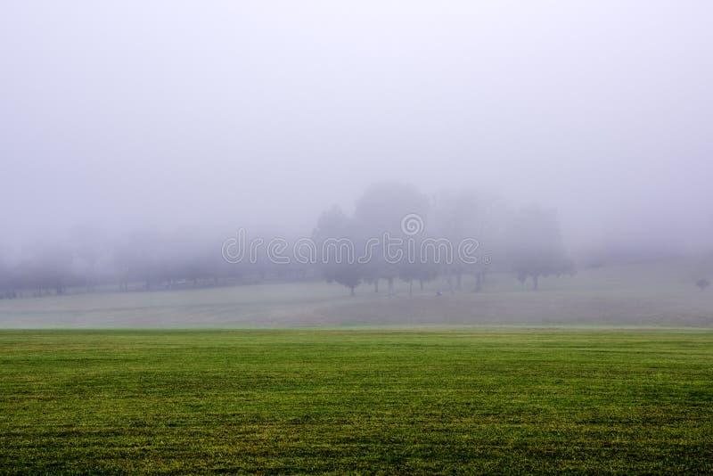 Gelbes Feld, einsamer Baum, bewölkter blauer Himmel lizenzfreie stockfotos