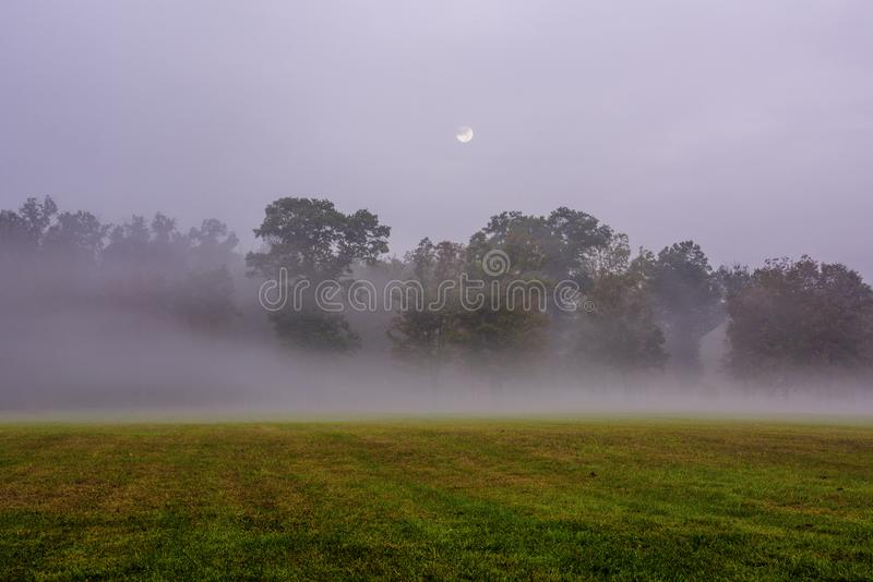 Gelbes Feld, einsamer Baum, bewölkter blauer Himmel lizenzfreies stockfoto