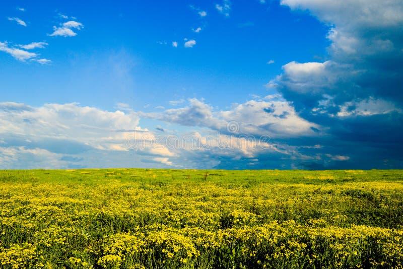 Gelbes Feld mit dem blauen Himmel stockfotografie
