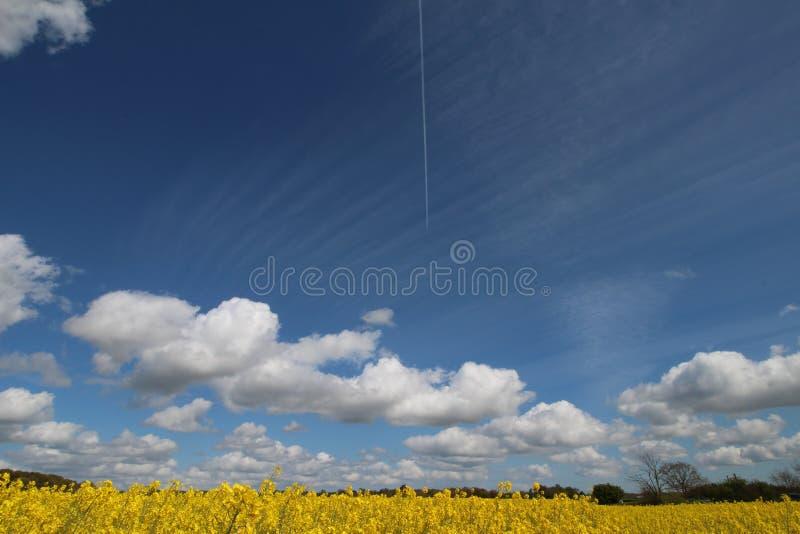 Gelbes Feld und wei?e Wolken stockbilder
