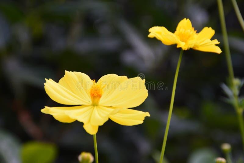 Gelbes floewer lizenzfreie stockfotografie