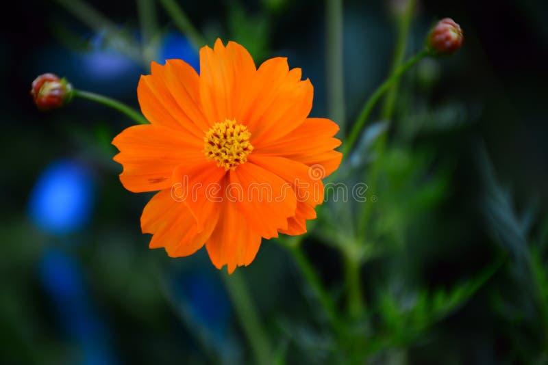 Gelbes floewer stockfotos
