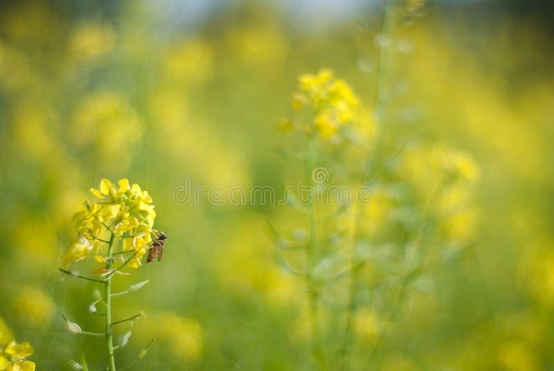 Gelbes flower power ganz vorbei stockfotografie