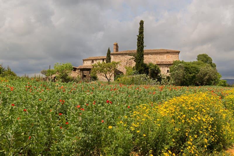 Gelbes Gänseblümchen- und Mohnblumenfeld um ein Landhaus in der Katze stockbilder