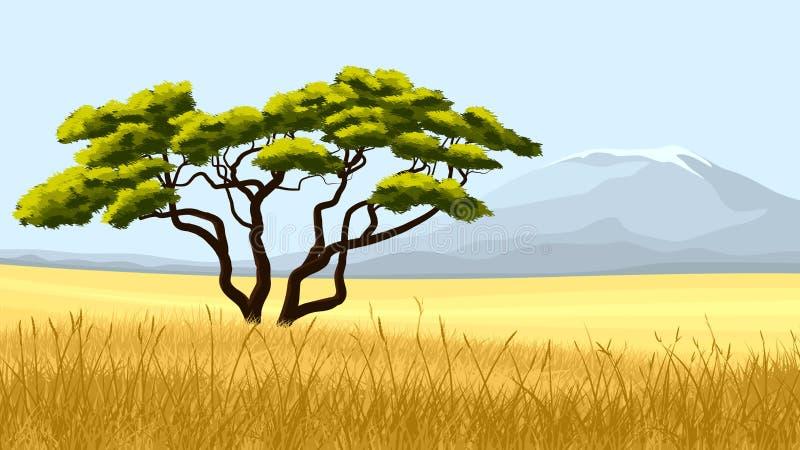 Gelbes Gras und afrikanische Akazie. stock abbildung