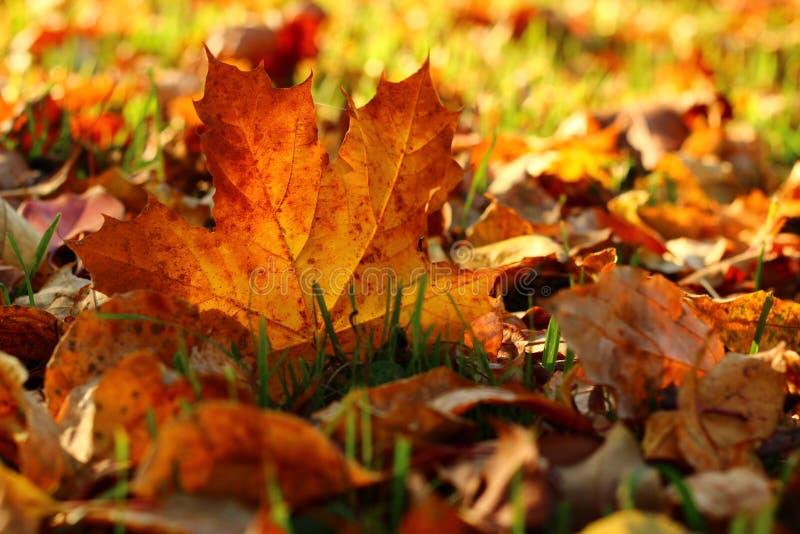 Gelbes Herbstblatt lizenzfreies stockbild