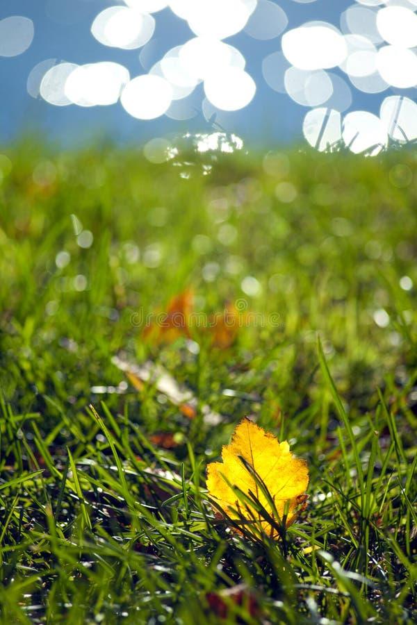 Gelbes Herbstblatt der Pappel liegend auf dem Gras auf einem unscharfen Hintergrund des Flusswassers mit einem schönen bokeh lizenzfreie stockfotografie