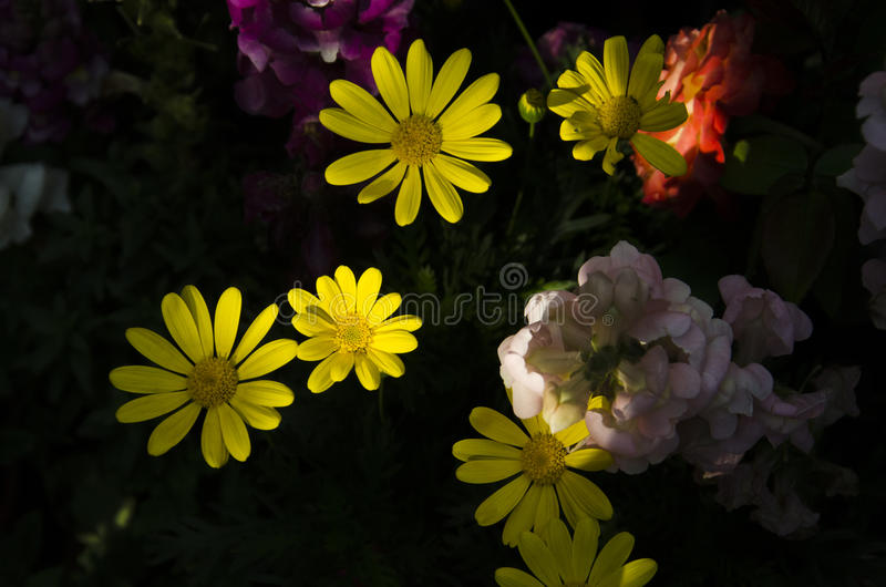 Gelbes Licht lizenzfreie stockfotografie