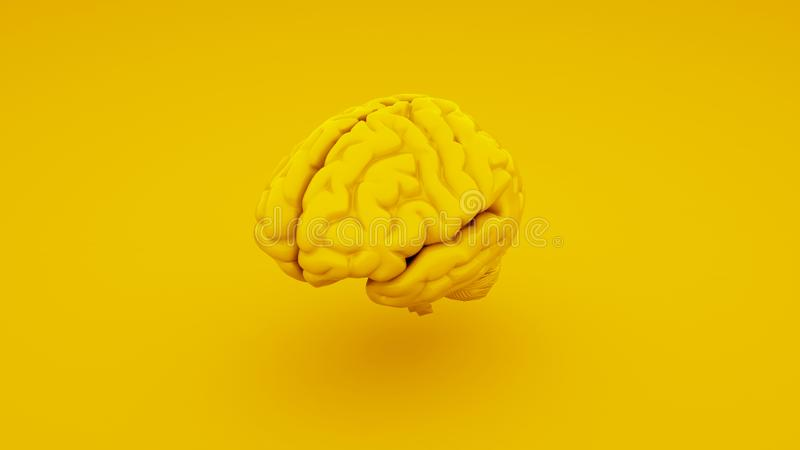 Gelbes menschliches Gehirn, anatomisches Modell Abbildung 3D stockfoto