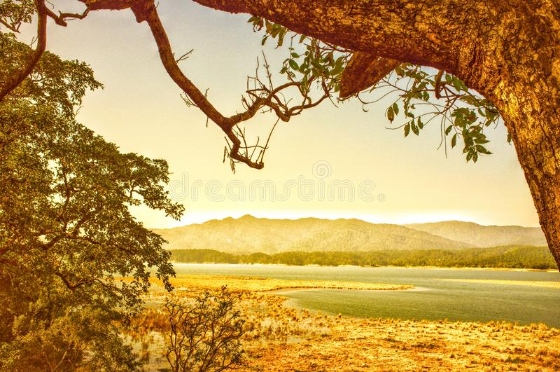 Gelbgrün u. Sambhar-` s am Land lizenzfreie stockbilder