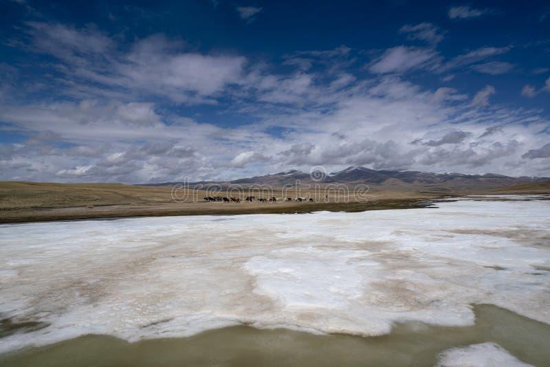 Gelbgras Fluss der Pferdeschwäne und der weißen Wolken des blauen Himmels gefrorenes in Bayanbulak im Frühjahr stockfotos