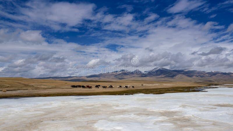 Gelbgras Fluss der Pferdeschwäne und der weißen Wolken des blauen Himmels gefrorenes in Bayanbulak im Frühjahr stockfotografie