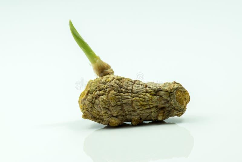 Gelbwurz-Wurzel stockfotografie
