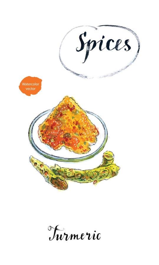 Gelbwurzpulver auf einer Platte und neue Gelbwurzwurzeln im watercolo lizenzfreie abbildung
