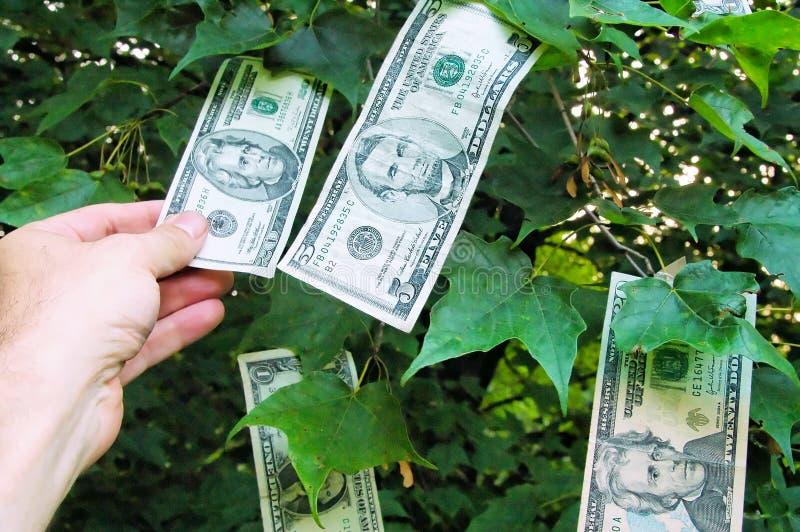Geld, das auf Bäumen wächst stockbild