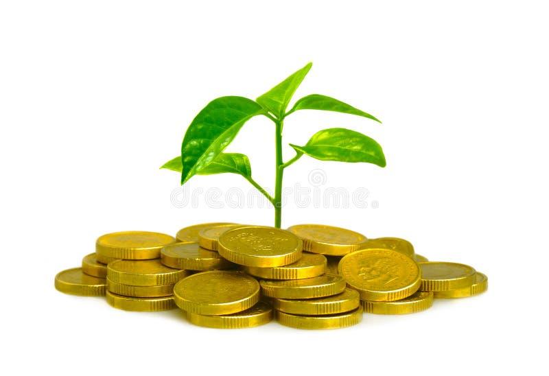 Geld en installatie royalty-vrije stock afbeelding