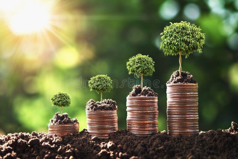 geld groeiende stap met boom en zonsopgang de boekhouding van conceptenfinanci?n royalty-vrije stock foto's