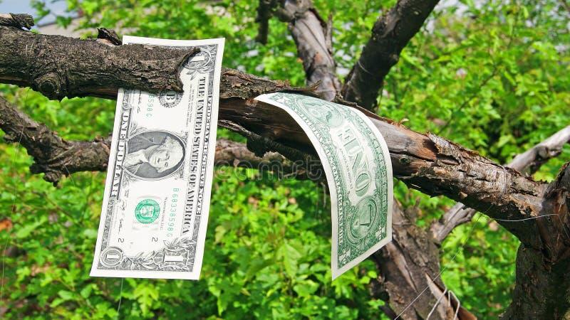 Geldboom royalty-vrije stock foto