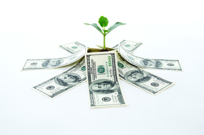 Gelddollar mit grünem Sprössling lizenzfreie stockbilder