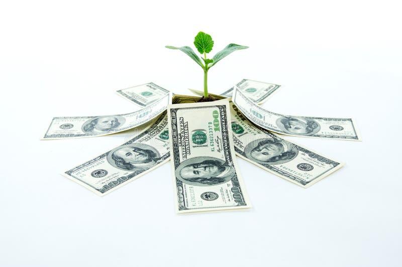 Gelddollars met groene spruit royalty-vrije stock afbeeldingen