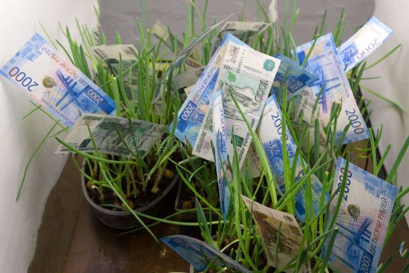 Geldgras: Russische roebelrekeningen in groen gras Appreciatie van Russische roebel Pen, oogglazen en grafieken stock foto's