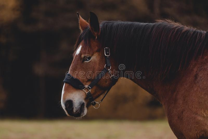 Gelding horse with blue eyes and white spot on forehead in autumn stock photos