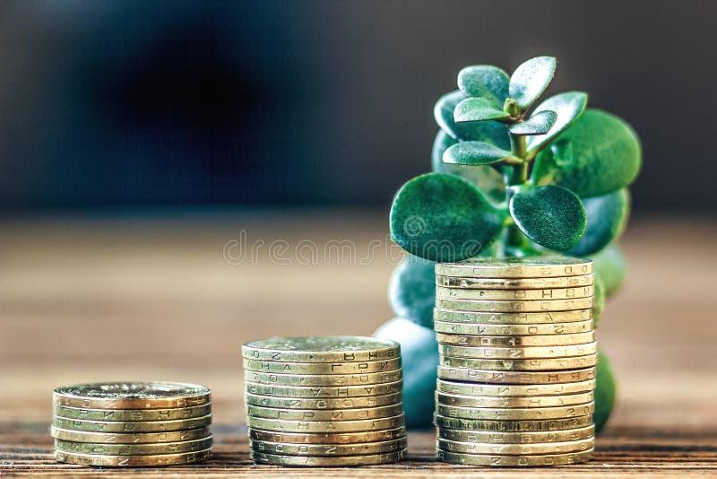 Geldmengenwachstumskonzept Finanzwachstumskonzept mit Stapeln von goldenen Münzen und von Geldbaum (Crassulaanlage) stockbild
