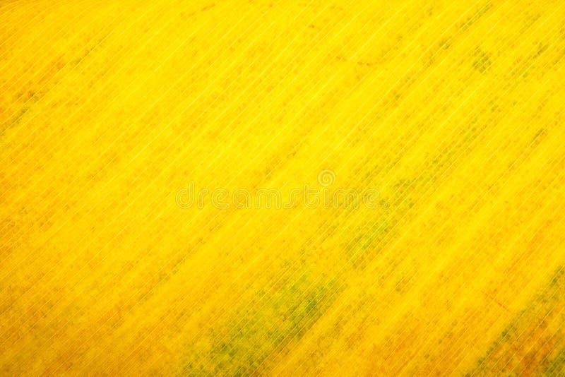 Gele achtergrond van de textuur van het de herfstblad stock afbeeldingen