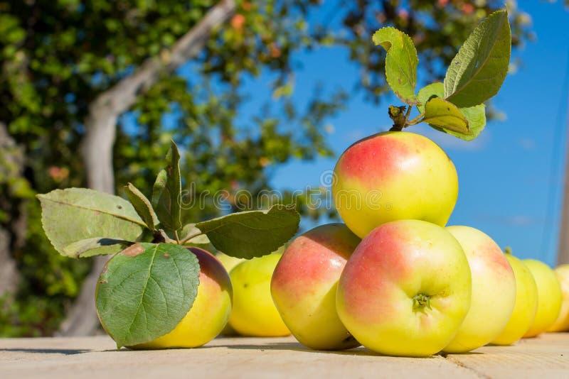 Gele appelen op een houten lijst in tuin in de zomer royalty-vrije stock afbeelding