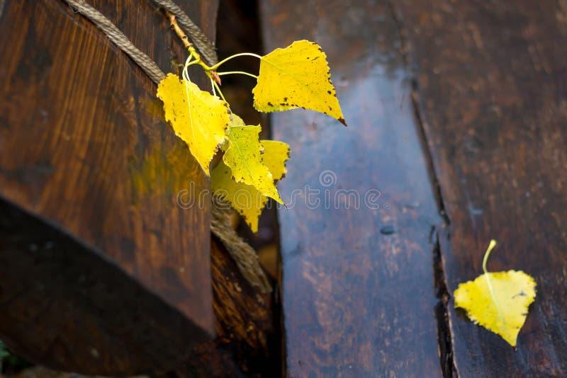 Gele berkbladeren op een natte houten bank in het park in fall_ stock foto's