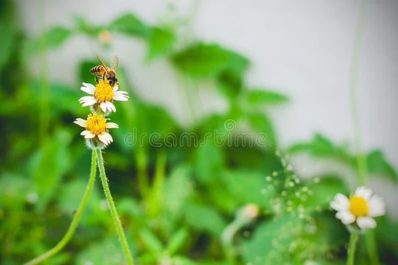 Gele bij en bloem stock foto's