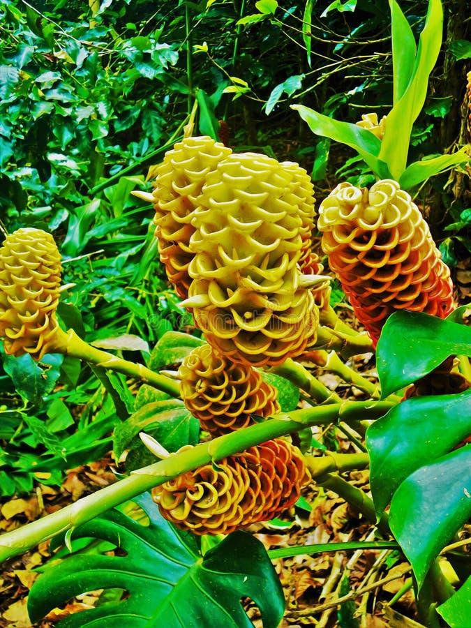 Gele bijenkorfgember stock foto