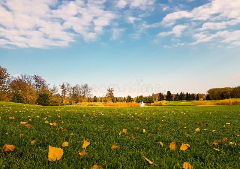 Gele bladdaling op groene weide in de herfstpark royalty-vrije stock foto's