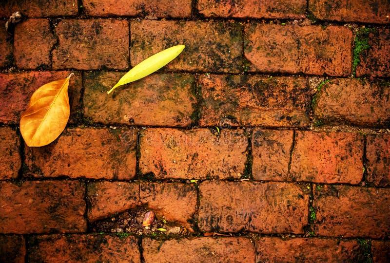 Gele bladdaling op rode baksteenvloer royalty-vrije stock afbeelding