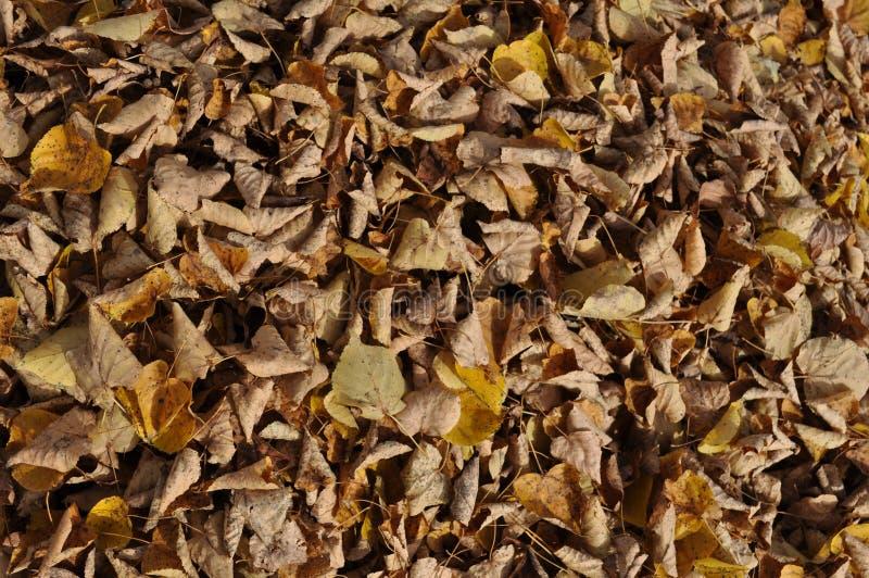 Gele bladdraagstoel royalty-vrije stock foto