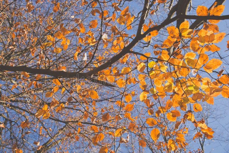 Gele bladeren royalty-vrije stock afbeeldingen