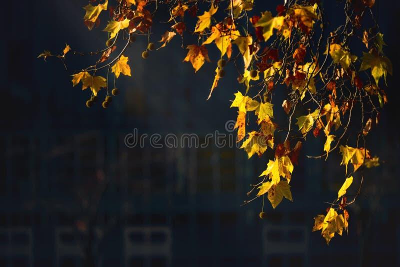 Gele bladeren in de zon stock foto's