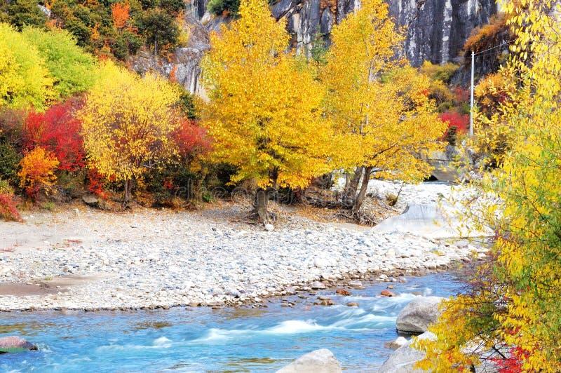 Gele bladeren en de beek van A stock afbeeldingen