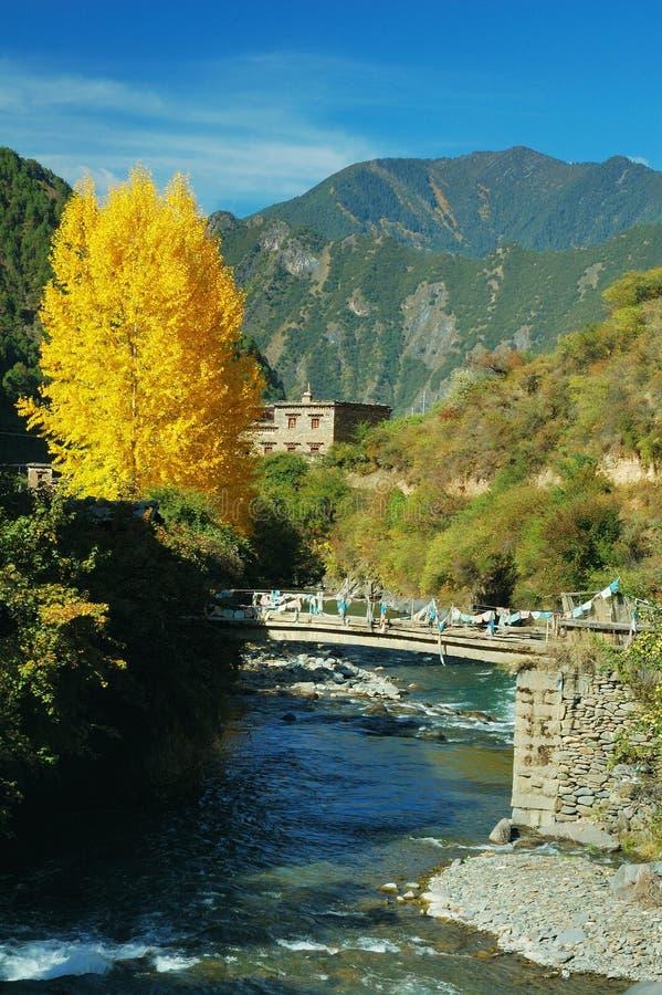 Gele bladeren en de beek van A stock foto's