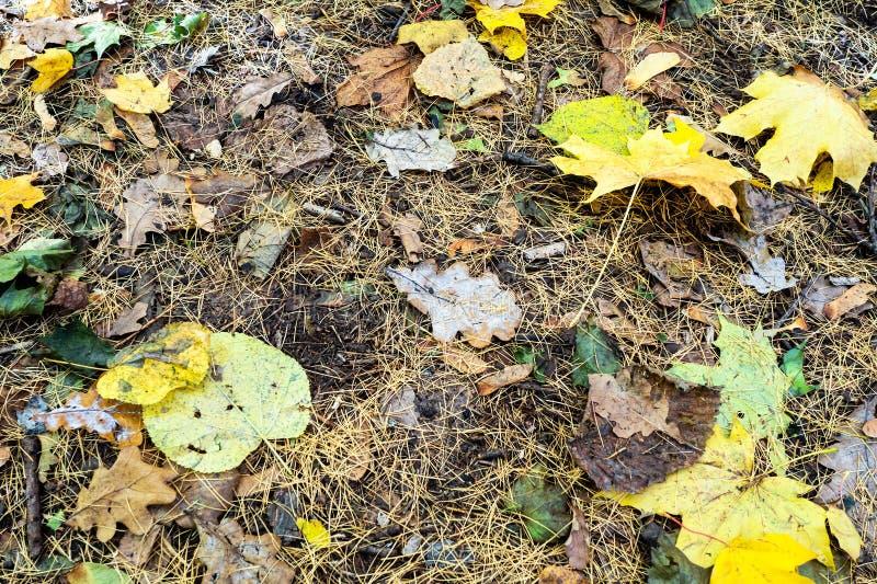 gele bladeren in gevallen lariksnaalden op grond royalty-vrije stock fotografie