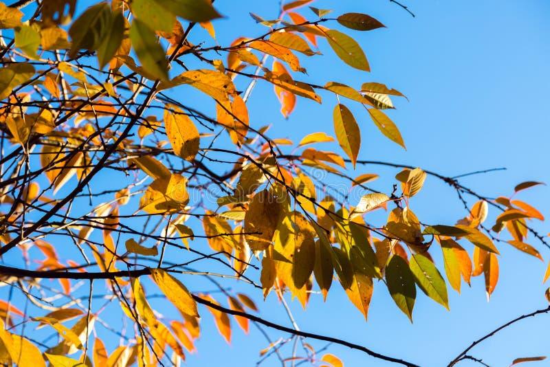 Gele bladeren op de takken van bomen over blauwe hemel De herfstweiland royalty-vrije stock foto's
