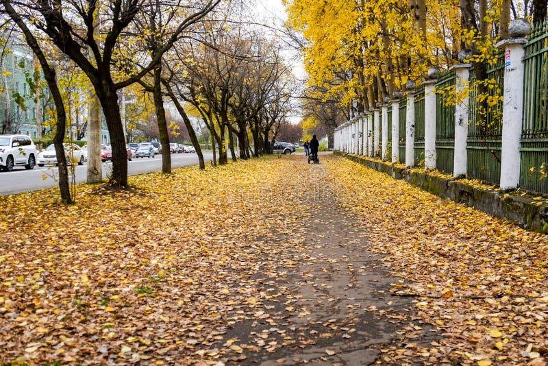 Gele bladeren op een stadssteeg royalty-vrije stock afbeeldingen