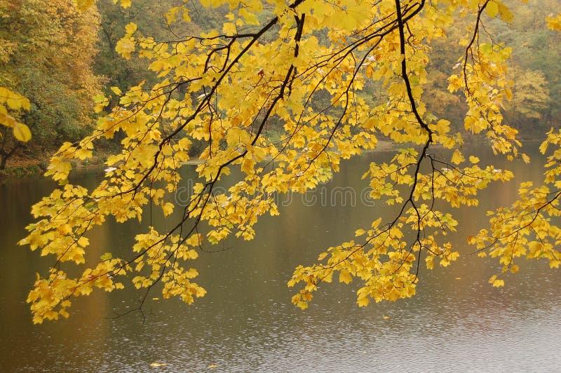 Gele bladeren over meer stock afbeeldingen