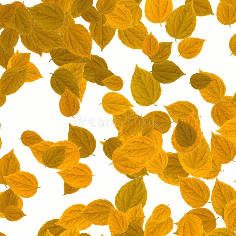 Gele bladeren over witte achtergrond royalty-vrije stock foto