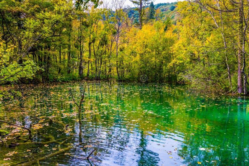 Gele bladeren van de herfstbomen stock foto