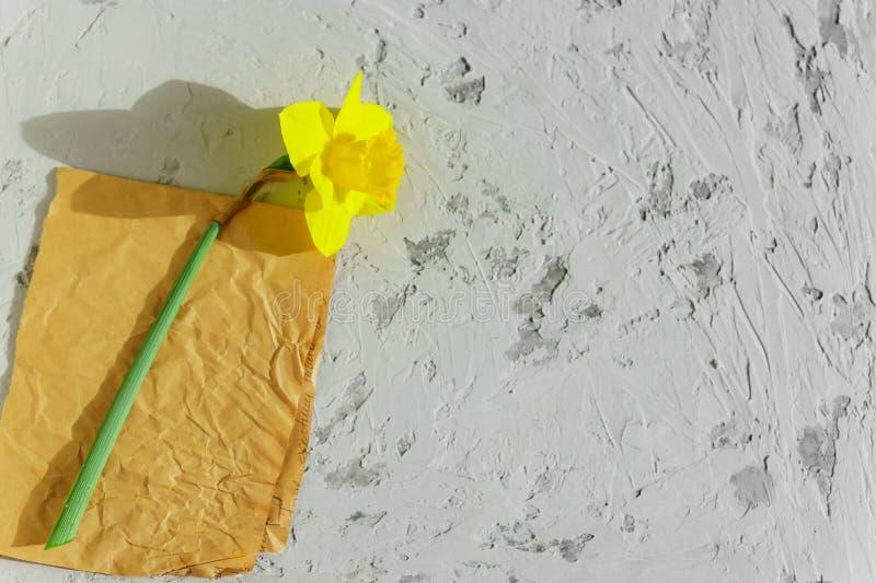 Gele bloeiende narcissenbloem op ambachtdocument en grijze achtergrond De ruimte van het exemplaar stock afbeelding