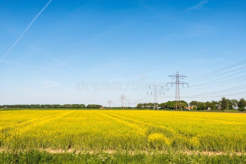 Gele bloeiende raapzaadinstallaties in de lente royalty-vrije stock fotografie