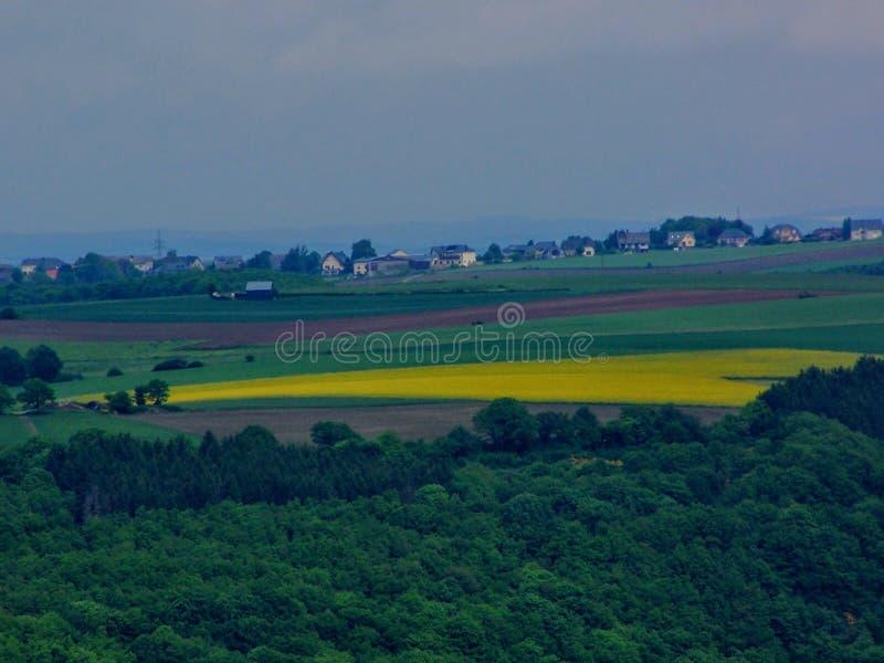 Gele bloeiende verkrachtingsgebieden, raap & x28; Brassica napus& x29; , bloeiend verkrachtingsgebied in de lente, België, buiten royalty-vrije stock foto